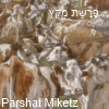 Parshat Miketz
