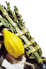 Deluxe Kosher Lulav and Etrog Set from Israel
